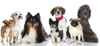 Free Group Of Dogs Royalty Free Stock Images - 28454609