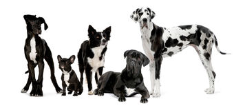Free Group Of Dogs Stock Photography - 5394642