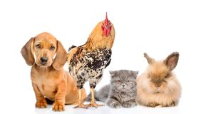 Free Group Of Domestic Animals And Bird.  On White Background Royalty Free Stock Photography - 157793617