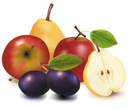 Free Group Of Fruit. Stock Images - 15275744