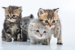 Free Group Of Little Kittens Stock Photo - 23890810