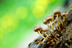 Group Of Mushrooms Royalty Free Stock Images