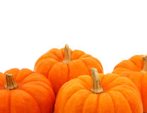 Group Of Orange Gourds Over White Stock Photo