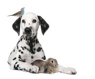 Group Of Pets : Dog Puppy, Bird, Rabbit Stock Photo