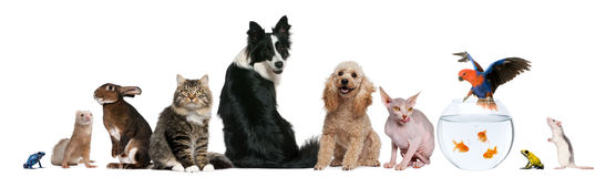 Free Group Of Pets Sitting In Front Of White Background Stock Photo - 19571710