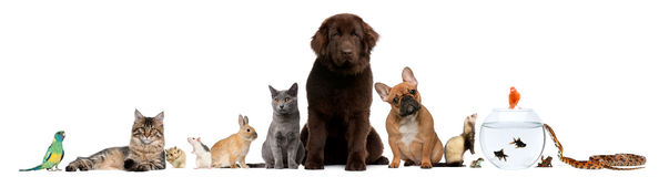 Free Group Of Pets Sitting In Front Of White Background Royalty Free Stock Photography - 19571777