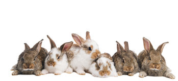 Group Of Rabbits In A Row Royalty Free Stock Photos