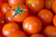 Group Of Red Tomato Stock Photography