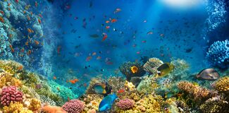 Free Group Of Scuba Divers Exploring Coral Reef. Underwater Sports And Tropical Vacation Concept Royalty Free Stock Image - 181472836