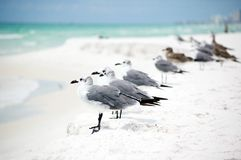 Group Of Seagulls Standing In A Row On The Seashor Stock Image