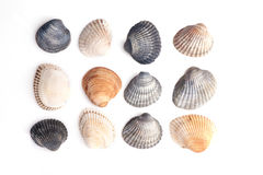 Free Group Of Seashells Royalty Free Stock Images - 94745509