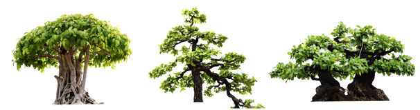 Free Group Of Tree Isolated On White Background. Royalty Free Stock Images - 92444069