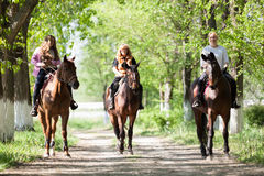 Group Of Woman Horse Riders In The Forest On Sunny Day Stock Photo