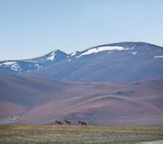 Mountain landscape in Ladakh, North India Royalty Free Stock Image