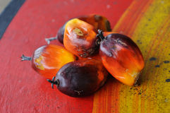 Group of oil palm fruits Stock Photography