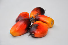 Group of oil palm fruits Royalty Free Stock Photos
