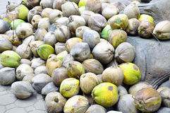 Group of old coconuts. For  coconut milk production Stock Photo