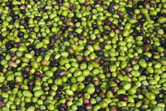 Group of olives Stock Images