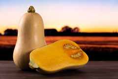 Smooth pear shaped orange butternut squash waltham with autumn field behind. Group of one whole one half of smooth pear shaped orange butternut squash waltham stock photo
