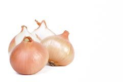Group of onions Stock Images
