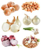 Group of onions Royalty Free Stock Photo
