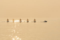 Group of Optimist sails towed into port bu rubber boat Royalty Free Stock Photography