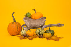 Group of orange and green pumpkins Royalty Free Stock Photography