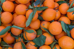 Group of oranges with green leaves. Stock Photo