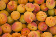 Group of organic apricot Royalty Free Stock Photos