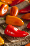 Group of Organic Colorful Hot Peppers Stock Photo