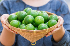 Group of organic lime on tree Stock Images