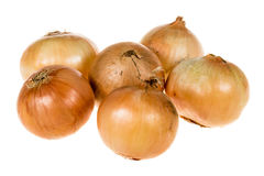 Group of organic onions Royalty Free Stock Photography