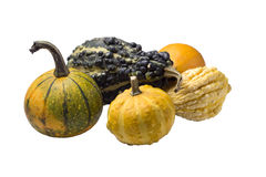 Group of Ornamental Gourds Stock Photography