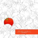 Fresh ripe tomatoes illustration. Group of outline fresh tomatoes and one red tomato Royalty Free Stock Photos