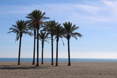Group of palm trees on the beach royalty free stock photos