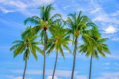 Group of palm trees, blue sky stock photography