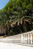 Group of palm trees growing over the stone fence on the embankment. Of Montenegro in the autumn royalty free stock photography