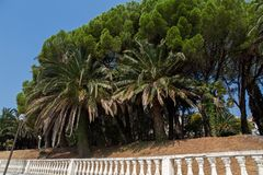 Group of palm trees growing over the stone fence on the embankment. Of Montenegro in the autumn stock photo