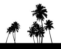 Group of palm trees silhouette Stock Image