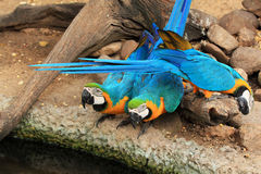 Group parrot macaws Stock Photo