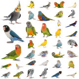 Group of parrots Stock Images