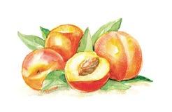 Group of peaches. Aqua water paint Stock Photo