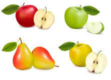 Group of pears and apples. Vector royalty free illustration