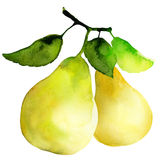 Group of pears. Watercolor painting on white background Royalty Free Stock Image