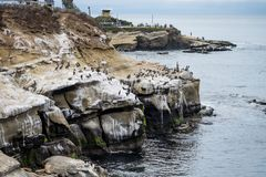 Group of pelicans at the beach. San Diego, California royalty free stock image