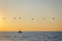 Group of pelicans flying on the beach at sunset - Puerto Vallarta, Jalisco, Mexico. Group of pelicans flying on the beach at sunset in Puerto Vallarta, Jalisco Royalty Free Stock Photos