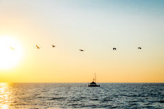 Group of pelicans flying on the beach at sunset - Puerto Vallarta, Jalisco, Mexico. Group of pelicans flying on the beach at sunset in Puerto Vallarta, Jalisco Royalty Free Stock Image