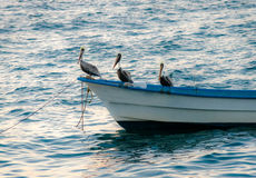 Group of pelicans sitting on  a boat - Puerto Vallarta, Jalisco, Mexico. Group of pelicans sitting on a boat - Puerto Vallarta, Jalisco, Mexico Royalty Free Stock Photo