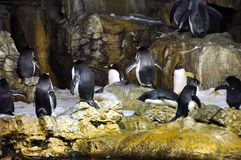 Group of penguins Stock Photography