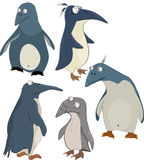 Group of penguins. Alaska animals bird Royalty Free Stock Photos